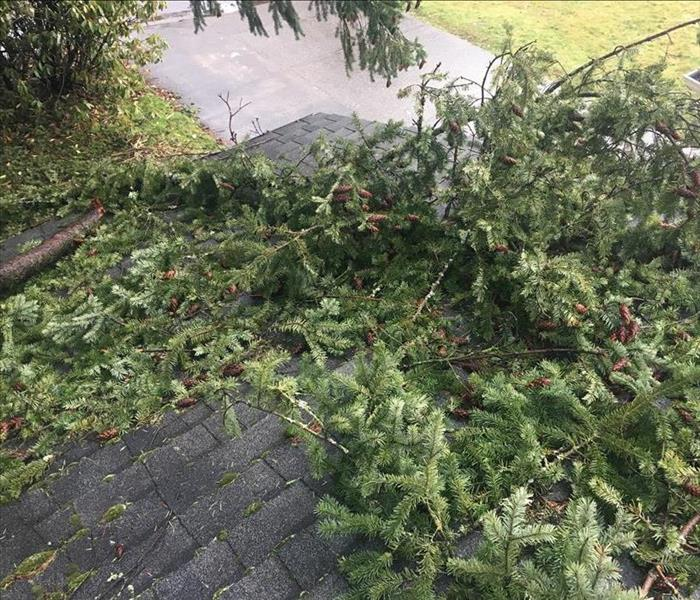 Tree Damages Roof in Oregon City