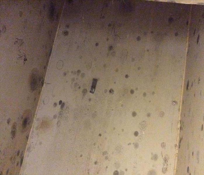 Mold Growth by Water Heater