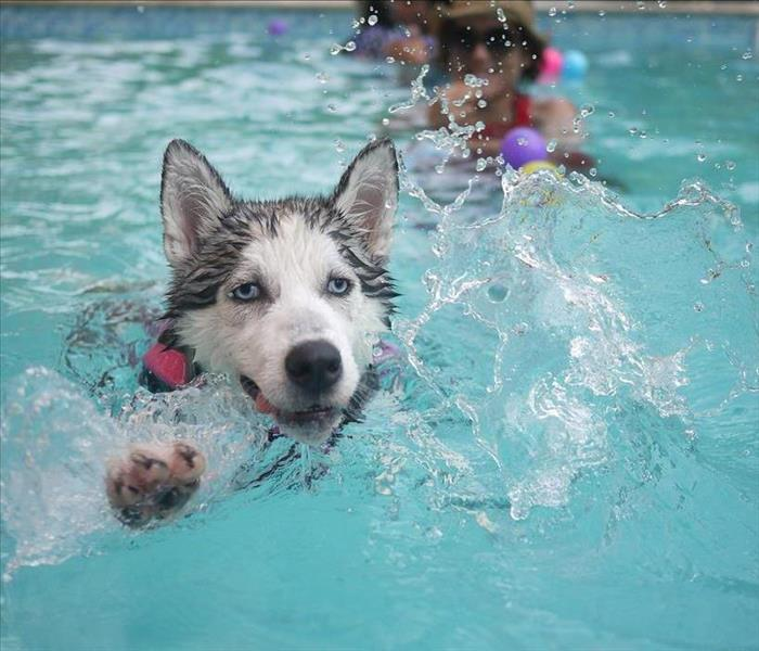 Community Do You Have a Pool for Your Pet in the Sandy Area?