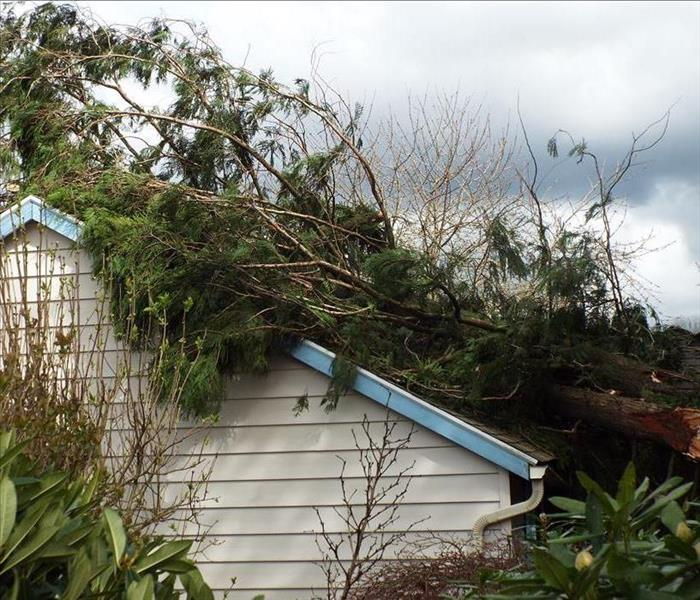 Storm Damage Windstorm in Estacada Causes Tree to Fall on Home